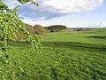Pasture near Bannamoor - geograph.org.uk - 427614.jpg