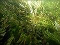 """Paysage subaquatique Subaquatic landscape rivière """"Les Baillons"""" à Enquin-sur-Baillons F Lamiot 01.jpg"""