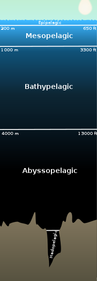 Abyssal zone - Wikipedia, the free encyclopedia