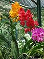 Penang Botanic Gardens (40).JPG