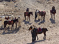 Petra - Bedouins ready to rent you a horse (9779189446).jpg