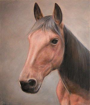 Pferdekopf (Zeichnung)