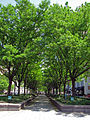 Piatt-Park-2.jpg