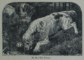 Picture Natural History - No 82 - The Spaniel.png
