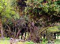 PikiWiki Israel 16432 Plants of Israel.JPG