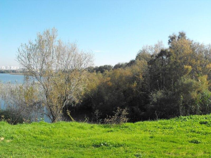 צמחיה באגם ראשון-לציון