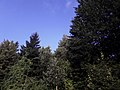 Planina Romanija - prirodne ljepote 07.jpg