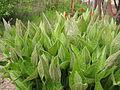 Plant 15 (6841695938).jpg