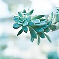 Plants (1 of 1)-17.jpg