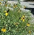 Plants OB 279 (24016278187).jpg