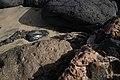 Playa de Piedras Caídas en la península de Jandía (03).jpg
