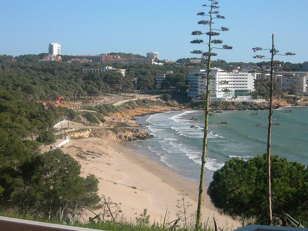 Bloeiende agaves aan Playa Larga
