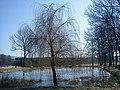 Pořešín - rybník 01.jpg