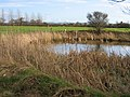 Pond at Hatton Heath - geograph.org.uk - 317668.jpg