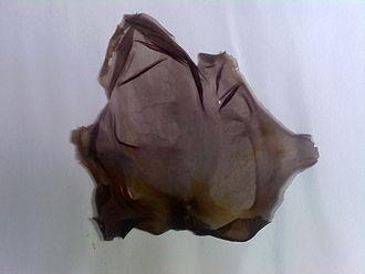 Laver (seaweed) - Porphyra umbilicalis