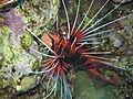 Port Ghalib march 2006-0192.jpg