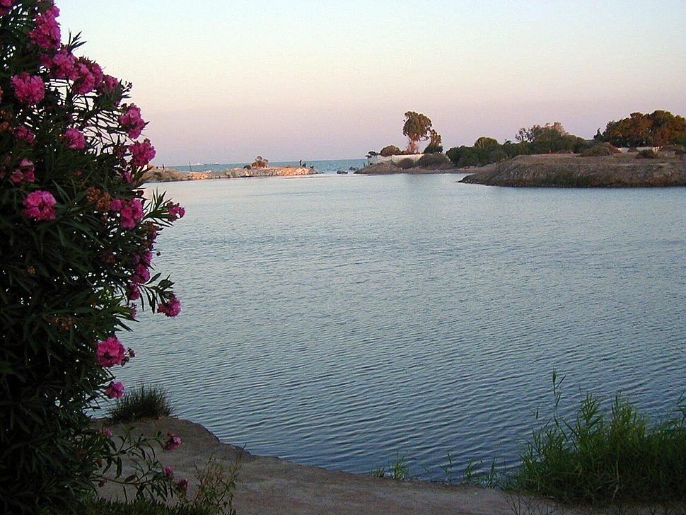 Port circulaire laurier rose