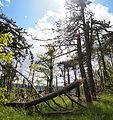 Postojna - broken trees3.jpg
