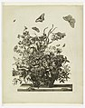 Print, Plate 10, from set of Flowers in a Basket, ca. 1680 (CH 18352803).jpg