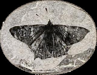 Prehistoric Lepidoptera