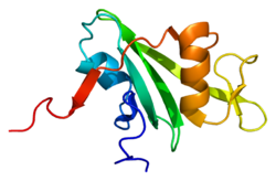 Protein ABL2 PDB 1ab2.png