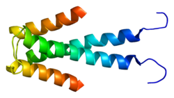 Protein HEY1 PDB 2db7.png
