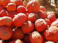 Pumpkins in NH 02.jpg
