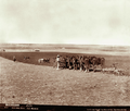 Queensland State Archives 3984 Six furrow plough two horse driller and four horse harrow at Green Hills Farm near Warwick 4 May 1894.png