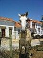 Quinta da Broa - Azinhaga - Portugal (739735325).jpg
