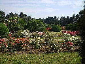 Iași Botanical Garden - The Rosary Section
