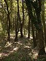 Rab Wald.jpeg