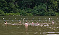 Raccoon Creek State Park Swimming.jpg