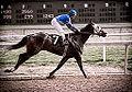Race Horse -7 (14296943738).jpg