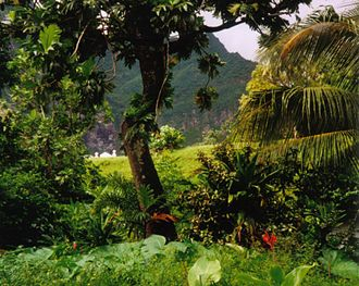 Natural resource - The rainforest in Fatu-Hiva, in the Marquesas Islands, is an example of an undisturbed natural resource. Forest provides timber for humans, food and shelter for the flora and fauna. The nutrient cycle between organisms form food chains and biodiversity of species.