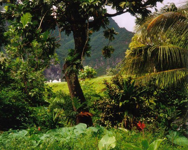 Hutan tatu hiva