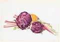 Red Cabbages, Rhubarb and Orange MET DP234202.jpg