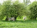 Rees-Reeserward NSG Grietherorter Altrhein PM18-02.jpg