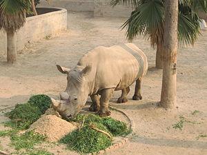 Lahore Zoo - Image: Rhino, Lahore Zoo, Pakistan