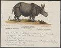 Rhinoceros unicornis - 1700-1880 - Print - Iconographia Zoologica - Special Collections University of Amsterdam - UBA01 IZ22000223.tif