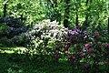 Rhododendronpark Bremen 20090513 054.JPG
