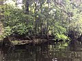 River Rise Preserve State Park.jpg