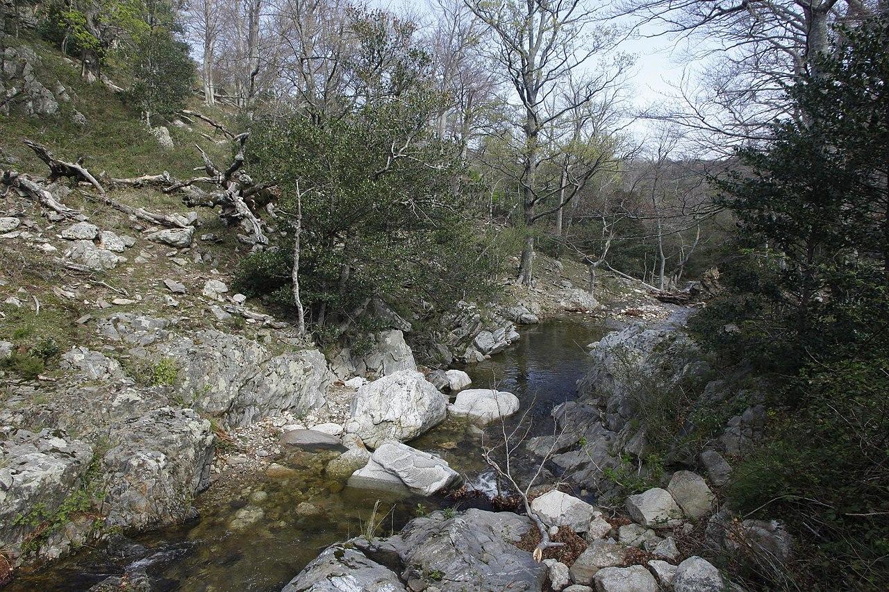 La rivière Massane