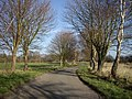 Road Under The Trees Towards Ongar Hill - geograph.org.uk - 326567.jpg