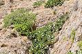Rock formations near Exomitis - Santorini - Greece - 03.jpg