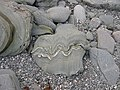 Rocks on the beach, Torrisdale, Kintyre - geograph.org.uk - 53119.jpg