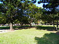 Rongxin Park Middle Woods.jpg