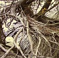 Roots Sepultura.JPG