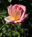 Rosa Inspiration.jpg