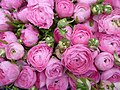 Roses roses marché Londres P1020246.jpg