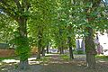"Rosskastanien ""Haldenstraße"" Nr. 81110001302.jpg"